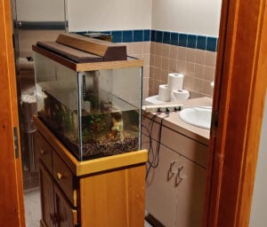 Even the fishtank got temporarily relocated to the bathroom.